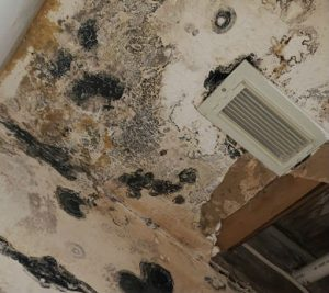 Houston Mold Remediation Services